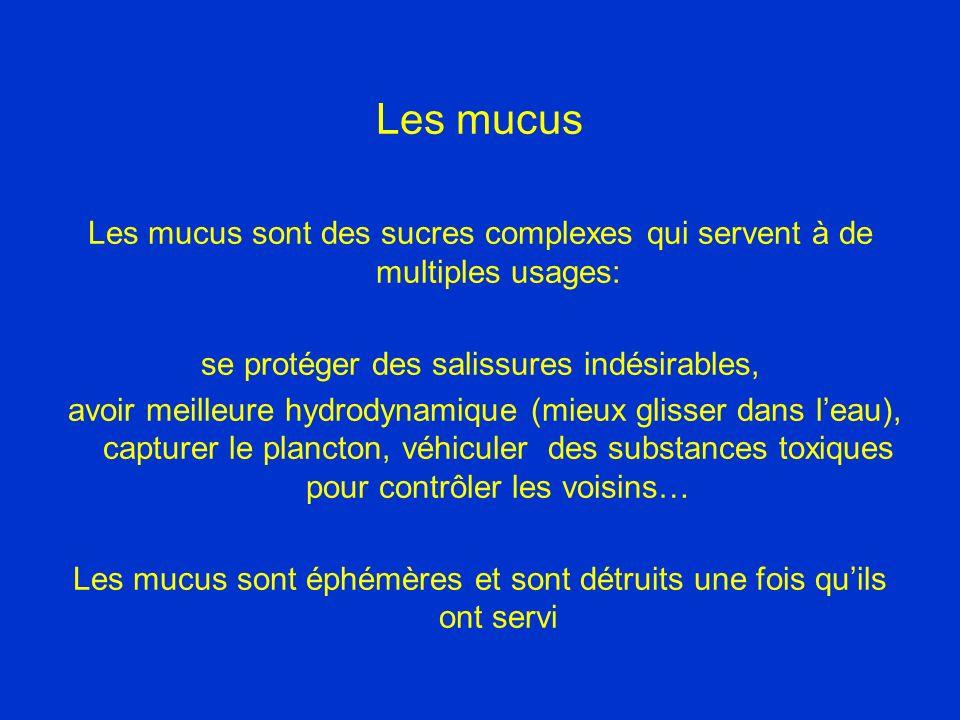 Les mucus Les mucus sont des sucres complexes qui servent à de multiples usages: se protéger des salissures indésirables, avoir meilleure hydrodynamique (mieux glisser dans leau), capturer le plancton, véhiculer des substances toxiques pour contrôler les voisins… Les mucus sont éphémères et sont détruits une fois quils ont servi