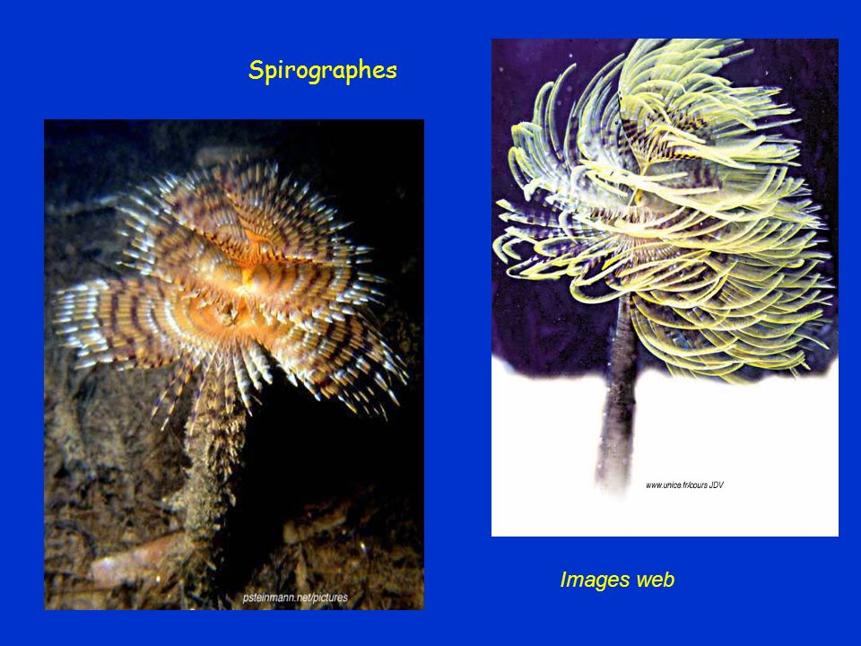 Spirographes Images web