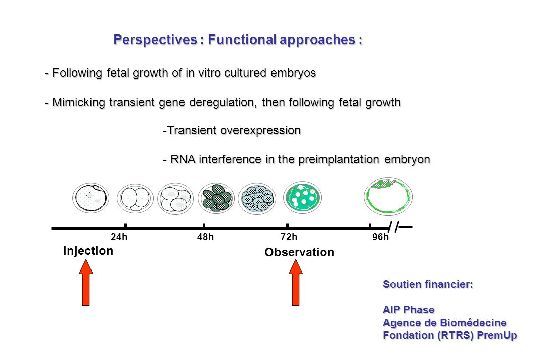 Perspectives : Functional approaches : -Transient overexpression - RNA interference in the preimplantation embryon - Following fetal growth of in vitro cultured embryos - Mimicking transient gene deregulation, then following fetal growth Soutien financier: AIP Phase Agence de Biomédecine Fondation (RTRS) PremUp