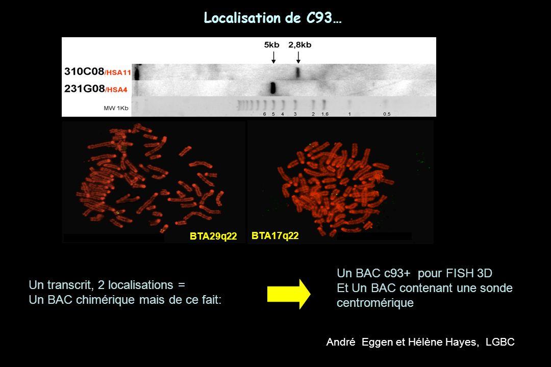 BTA29q22 Localisation de C93… BTA17q22 Un transcrit, 2 localisations = Un BAC chimérique mais de ce fait: Un BAC c93+ pour FISH 3D Et Un BAC contenant une sonde centromérique André Eggen et Hélène Hayes, LGBC