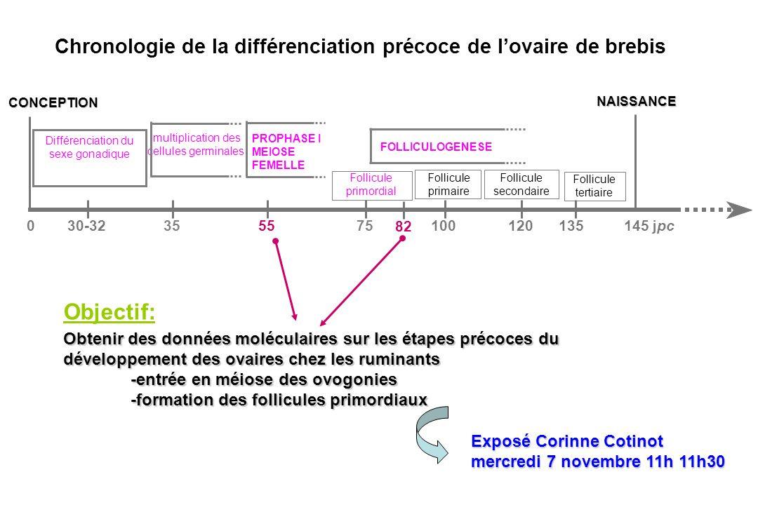 Chronologie de la différenciation précoce de lovaire de brebis Objectif: Obtenir des données moléculaires sur les étapes précoces du développement des ovaires chez les ruminants -entrée en méiose des ovogonies -formation des follicules primordiaux CONCEPTION Follicule primordial Follicule primaire Follicule secondaire Follicule tertiaire NAISSANCE 30-325575100120145 jpc0135 FOLLICULOGENESE 35 multiplication des cellules germinales Différenciation du sexe gonadique PROPHASE I MEIOSE FEMELLE 82 Exposé Corinne Cotinot mercredi 7 novembre 11h 11h30