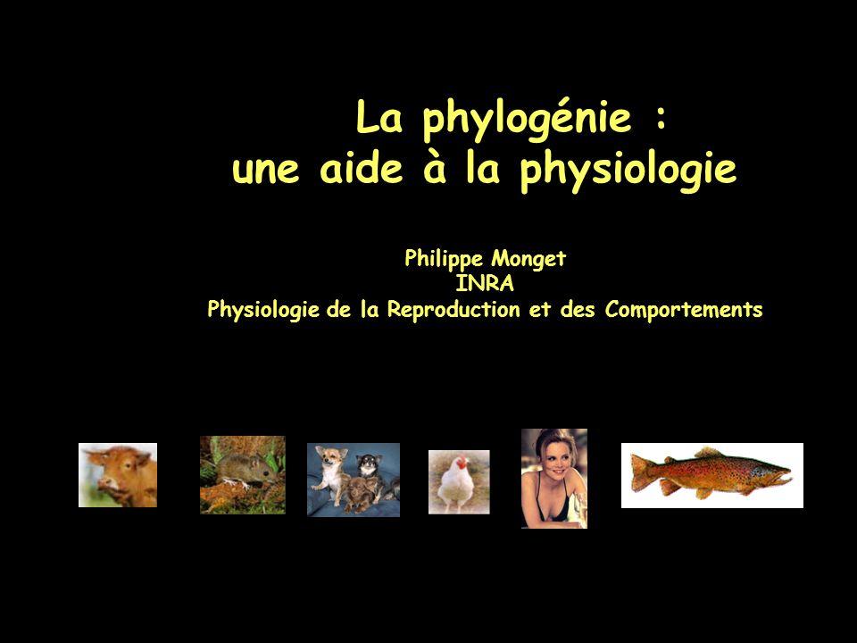 La phylogénie : une aide à la physiologie Philippe Monget INRA Physiologie de la Reproduction et des Comportements