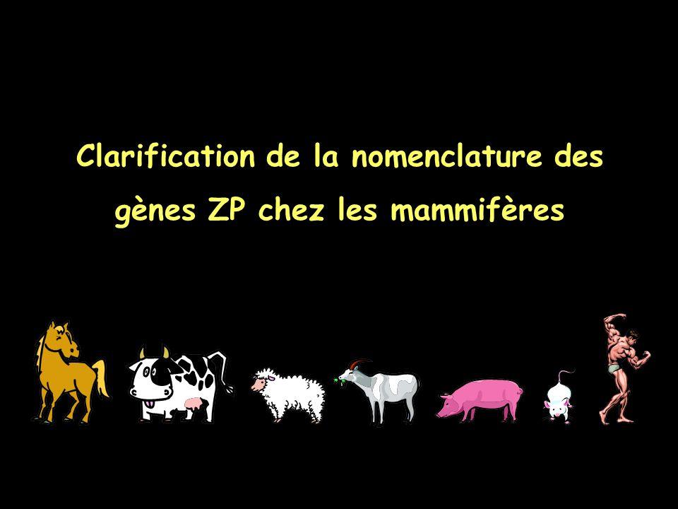 Clarification de la nomenclature des gènes ZP chez les mammifères