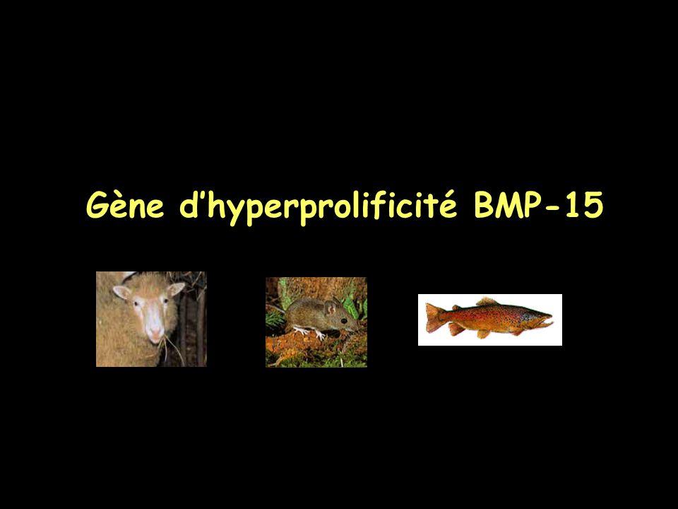Gène dhyperprolificité BMP-15