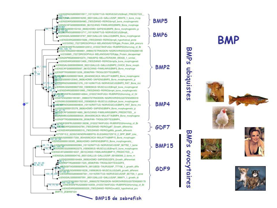 ZPA/ZP2 ZPC/ZP3 ZPD/ZP1 Clarification de la nomenclature des gènes ZP chez les mammifères: Une nouvelle zp qui vient de loviducte ??.