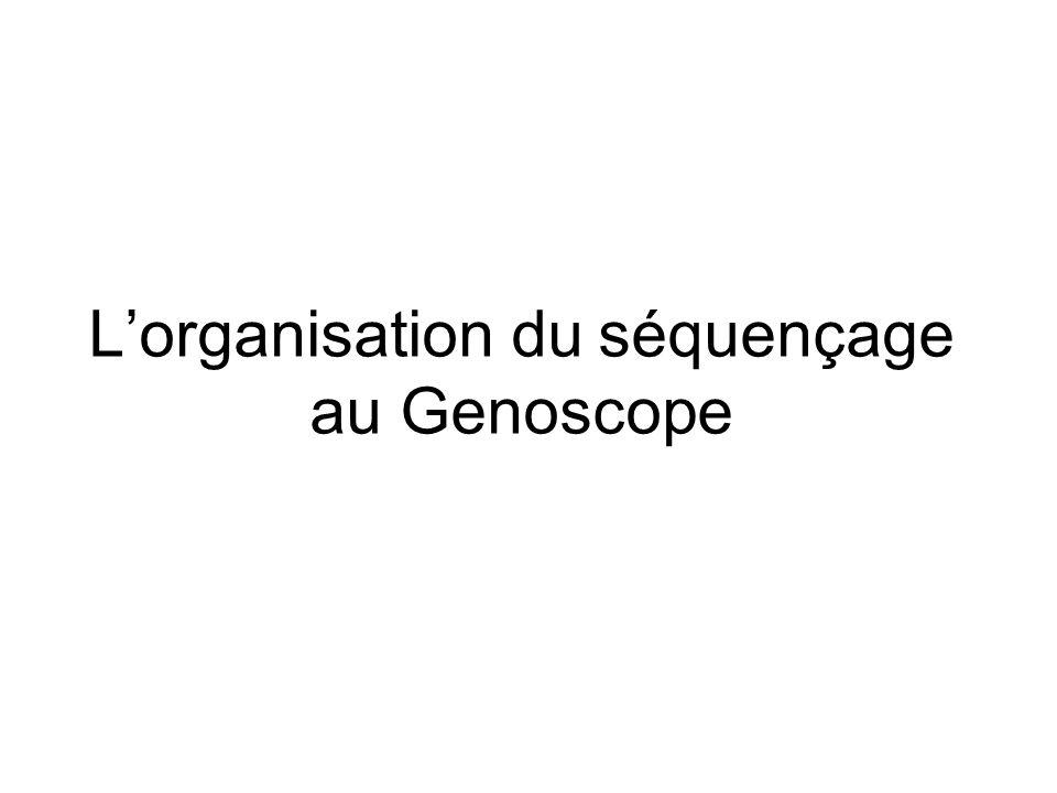 Lorganisation du séquençage au Genoscope