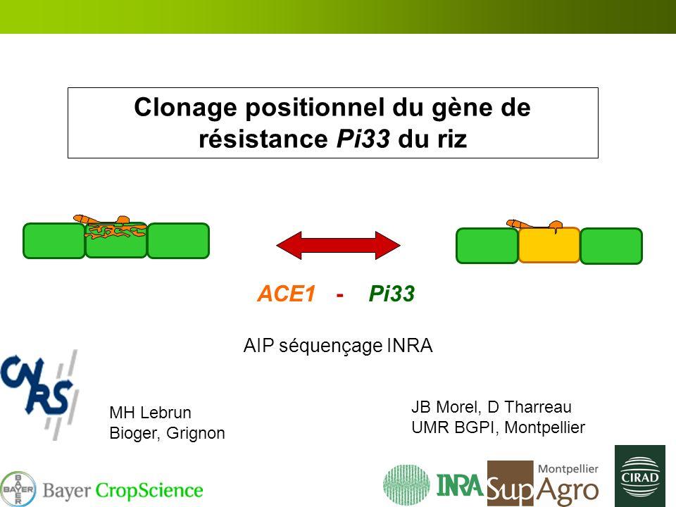 Clonage positionnel du gène de résistance Pi33 du riz ACE1 - Pi33 AIP séquençage INRA JB Morel, D Tharreau UMR BGPI, Montpellier MH Lebrun Bioger, Gri