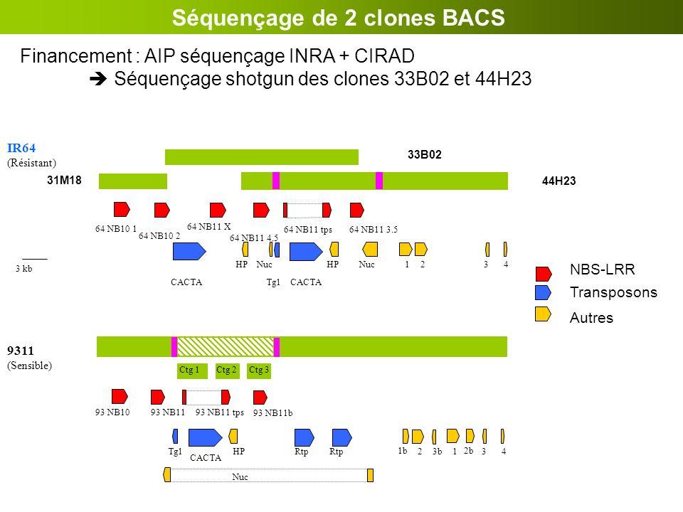 HP Nuc 43b2 1b 93 NB1193 NB11 tps CACTA Tg1 93 NB10 9311 (Sensible) 3 2b 1 Rtp 93 NB11b Ctg 1Ctg 2Ctg 3 Financement : AIP séquençage INRA + CIRAD Séqu