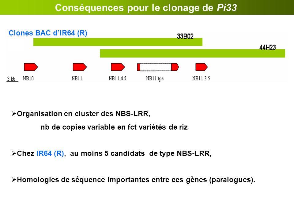Conséquences pour le clonage de Pi33 Organisation en cluster des NBS-LRR, nb de copies variable en fct variétés de riz Chez IR64 (R), au moins 5 candi