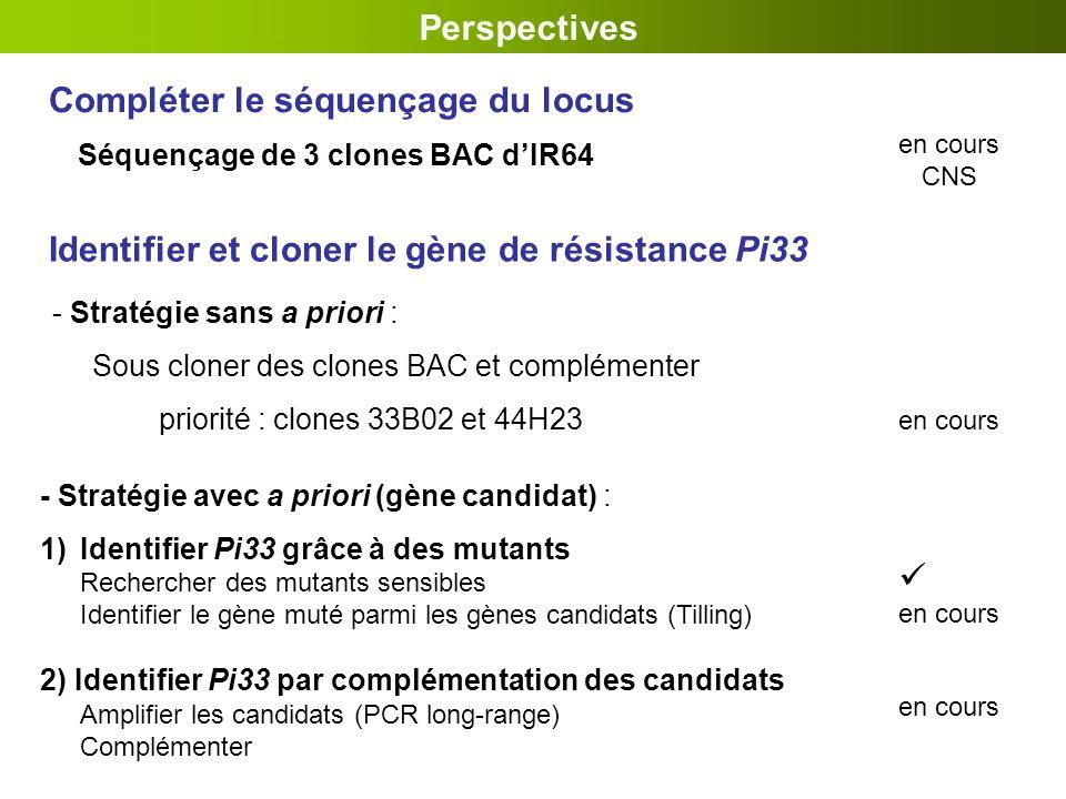 Compléter le séquençage du locus Perspectives - Stratégie avec a priori (gène candidat) : 1)Identifier Pi33 grâce à des mutants Rechercher des mutants