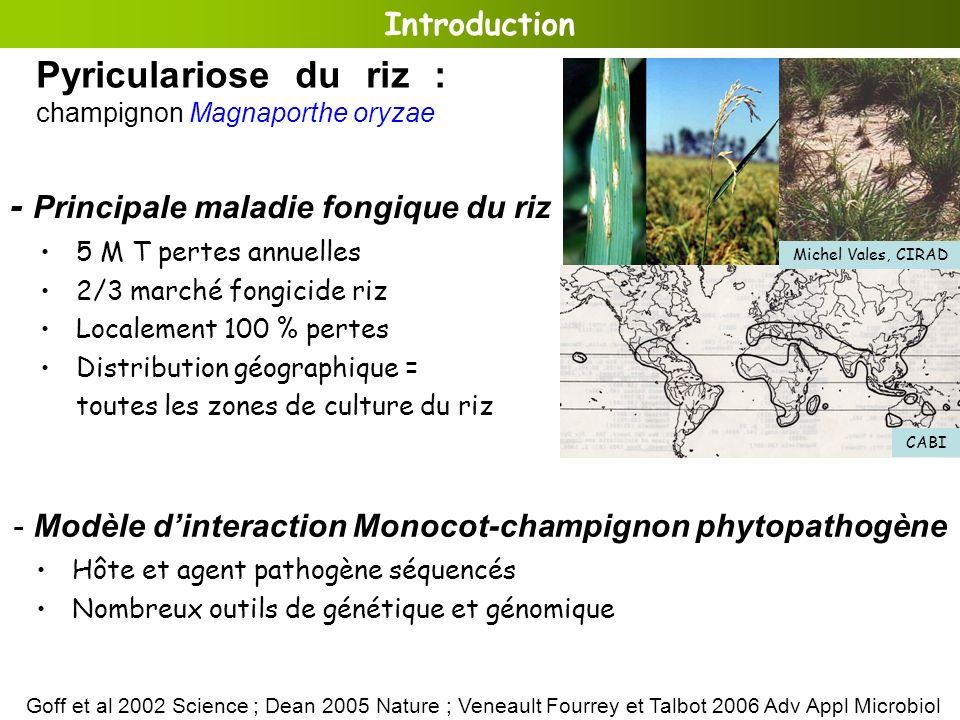 5 M T pertes annuelles 2/3 marché fongicide riz Localement 100 % pertes Distribution géographique = toutes les zones de culture du riz - Principale ma