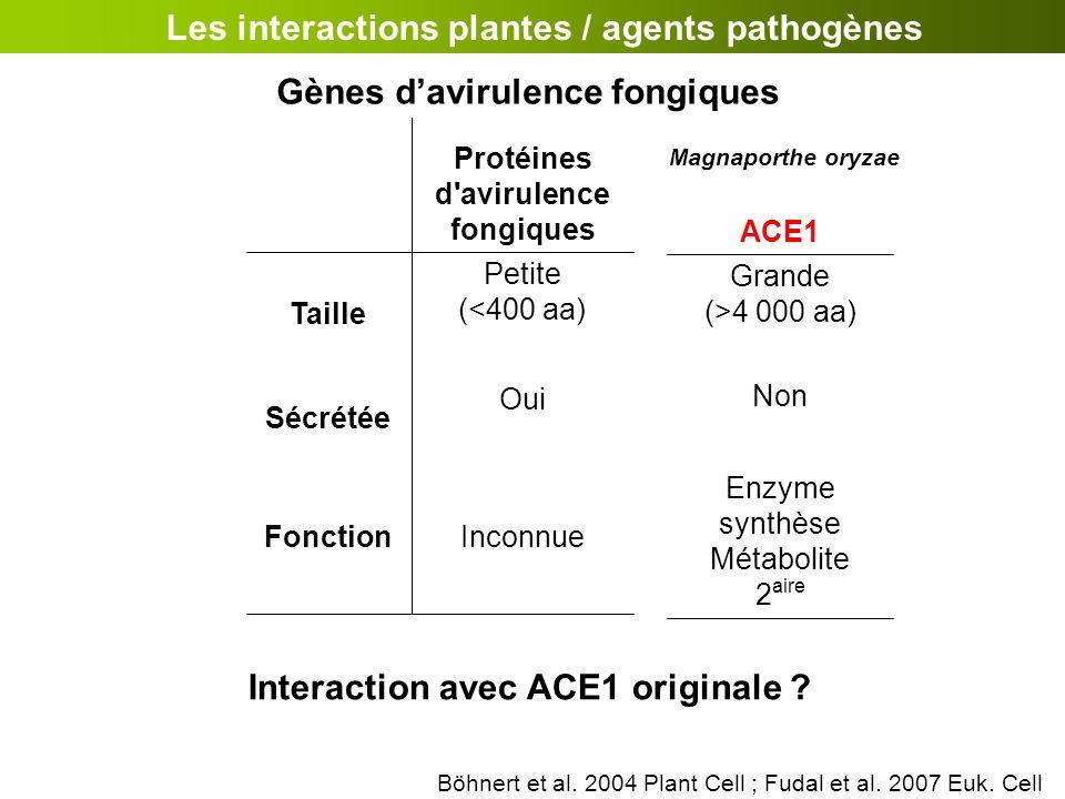 Interaction avec ACE1 originale ? Les interactions plantes / agents pathogènes InconnueFonction Oui Sécrétée Petite (<400 aa) Taille Protéines d'aviru
