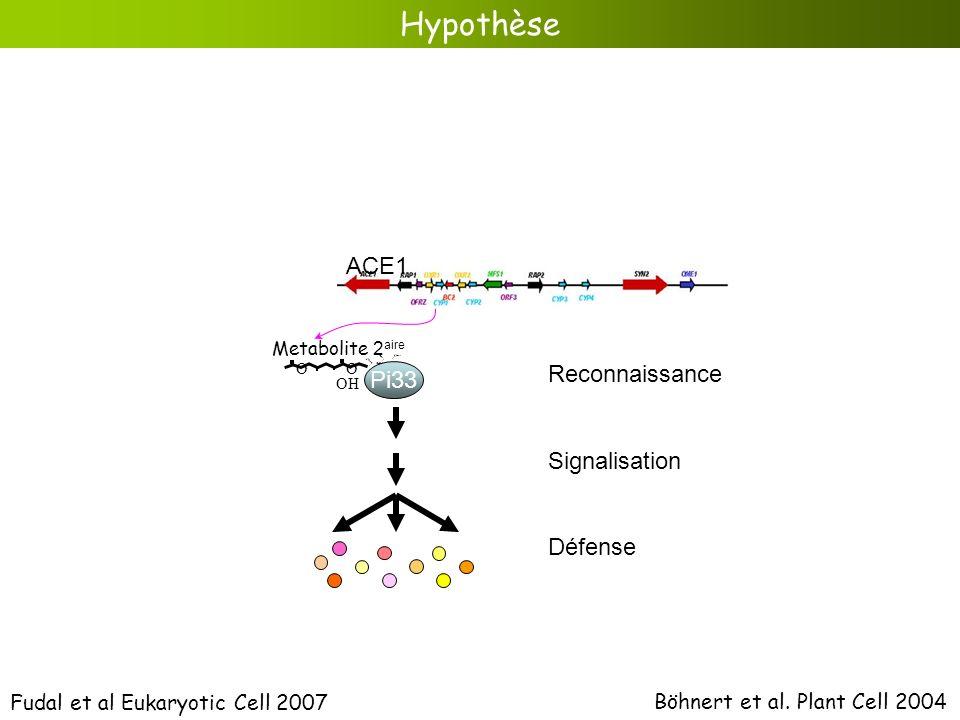 Hypothèse Böhnert et al. Plant Cell 2004 O O OH Metabolite 2 aire ACE1 Fudal et al Eukaryotic Cell 2007 Pi33 Reconnaissance Signalisation Défense