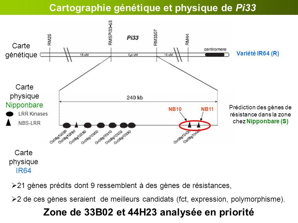 Prédiction des gènes de résistance dans la zone chez Nipponbare (S) LRR Kinases NBS-LRR Cartographie génétique et physique de Pi33 Clones BAC dIR64 (R