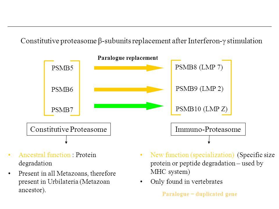 Constitutive proteasome β-subunits replacement after Interferon-γ stimulation Paralogue = duplicated gene Constitutive ProteasomeImmuno-Proteasome Par