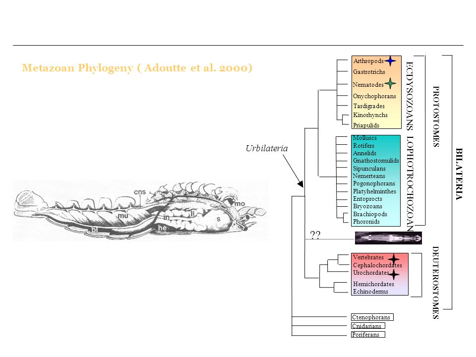 The next step for structural annotation : Is to take into account the gene evolutionary history