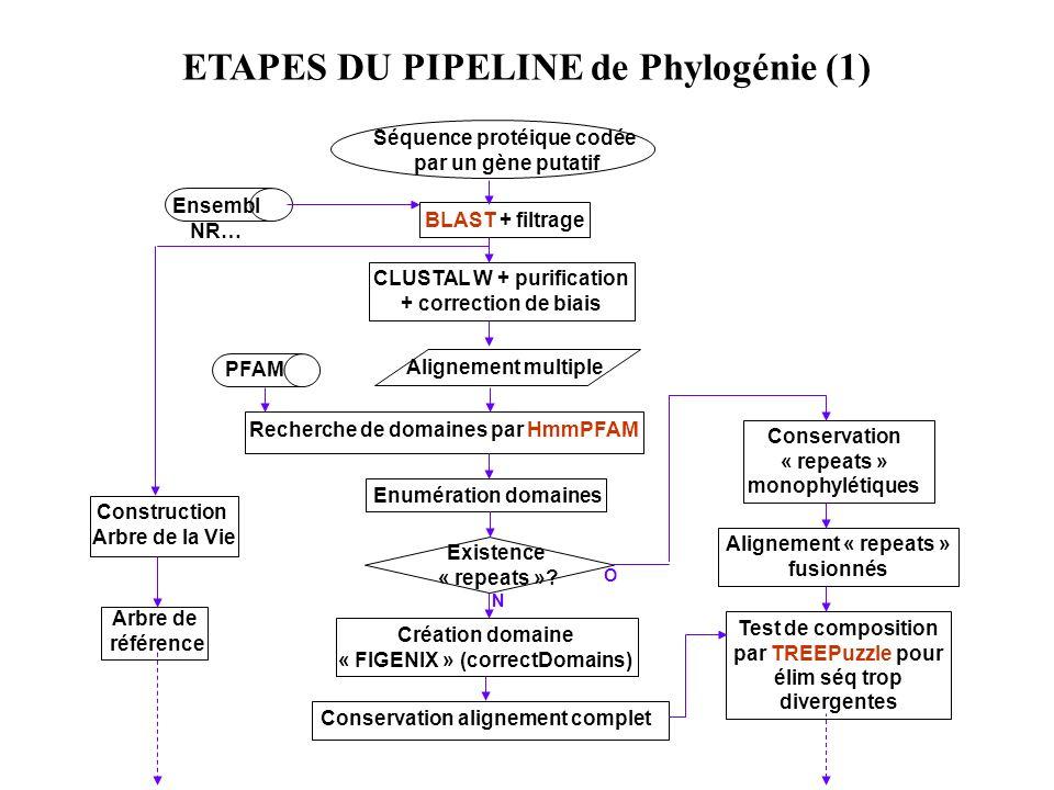 ETAPES DU PIPELINE de Phylogénie (1) Ensembl NR… Séquence protéique codée par un gène putatif BLAST + filtrage CLUSTAL W + purification + correction d