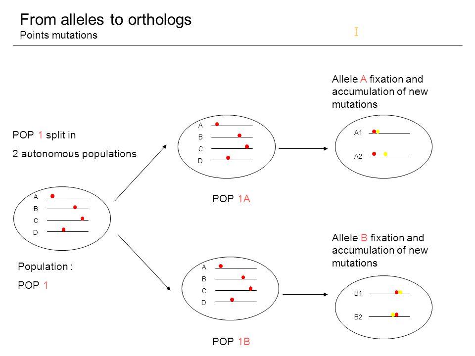 ETAPES DU PIPELINE de Phylogénie (1) Ensembl NR… Séquence protéique codée par un gène putatif BLAST + filtrage CLUSTAL W + purification + correction de biais Alignement multiple Conservation « repeats » monophylétiques Alignement « repeats » fusionnés Test de composition par TREEPuzzle pour élim séq trop divergentes Construction Arbre de la Vie PFAM Recherche de domaines par HmmPFAM Création domaine « FIGENIX » (correctDomains) Conservation alignement complet Existence « repeats ».