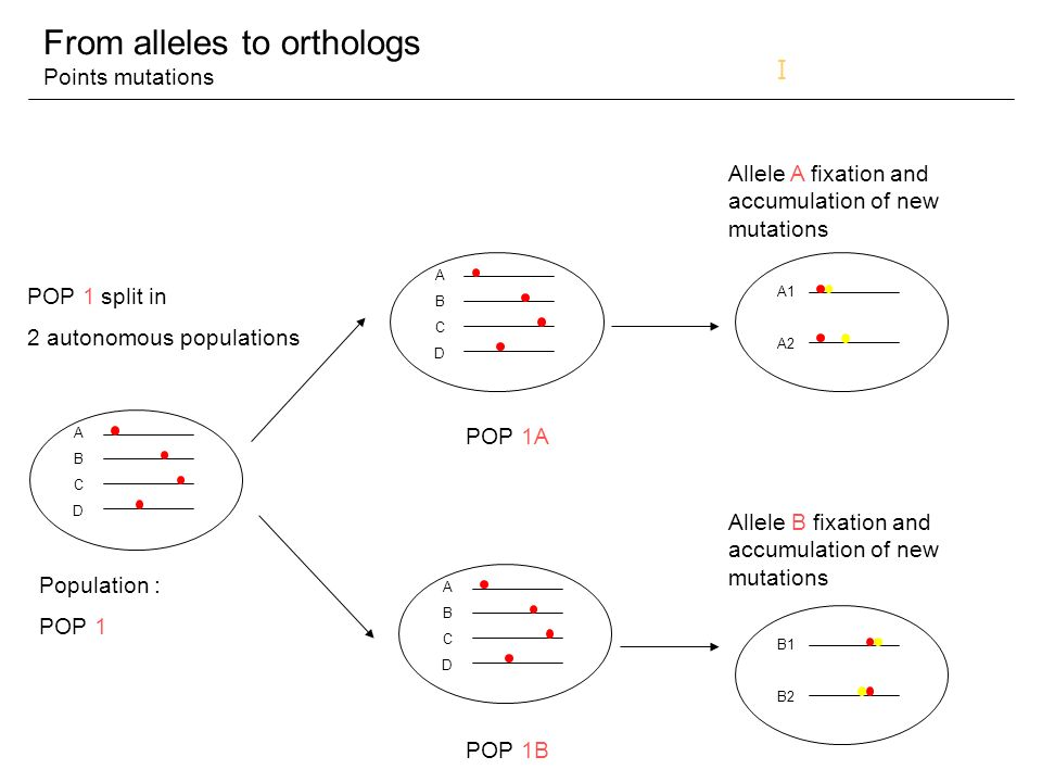 Open Discussion Phylo postgenomic