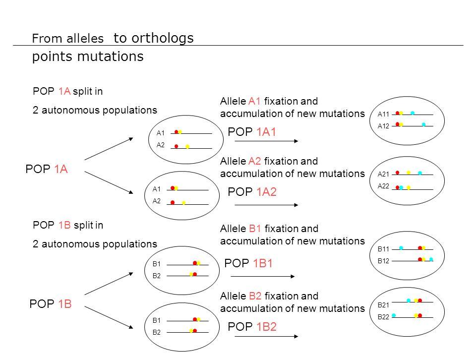Connaissances/concepts Observation : il existe des régions de syntenies conservées entre espèce.