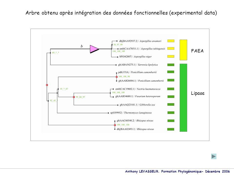 Anthony LEVASSEUR. Formation Phylogénomique- Décembre 2006 Lipase FAEA Arbre obtenu après intégration des données fonctionnelles (experimental data)