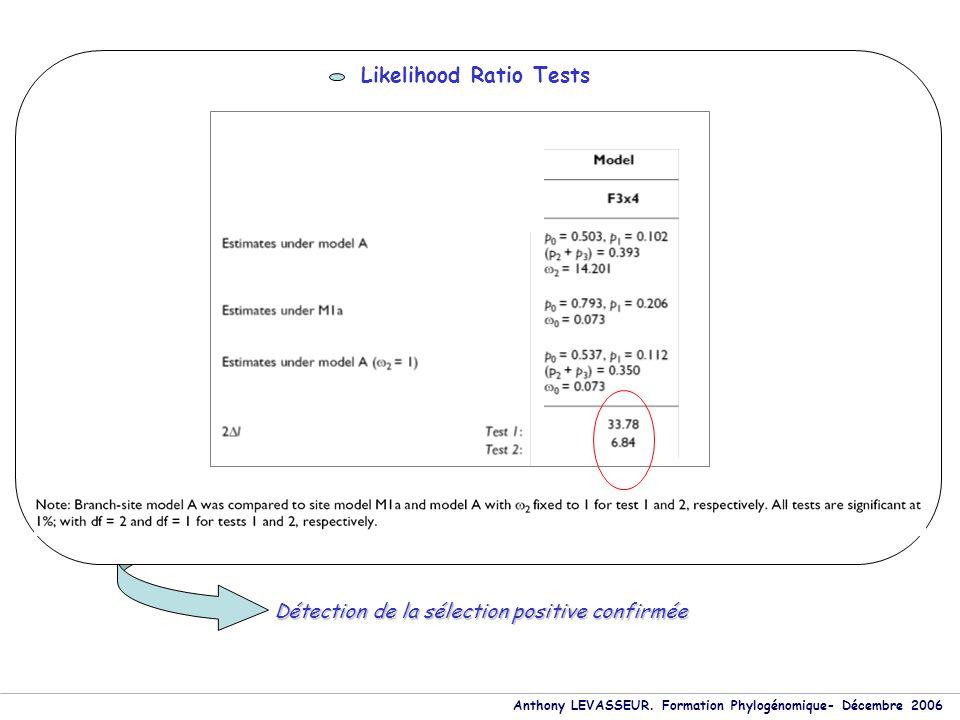 Anthony LEVASSEUR. Formation Phylogénomique- Décembre 2006 Likelihood Ratio Tests Détection de la sélection positive confirmée
