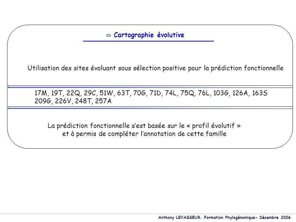 Anthony LEVASSEUR. Formation Phylogénomique- Décembre 2006 Cartographie évolutive Utilisation des sites évoluant sous sélection positive pour la prédi