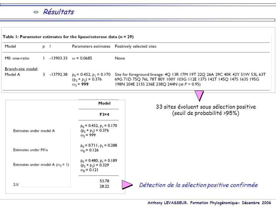 Anthony LEVASSEUR. Formation Phylogénomique- Décembre 2006 33 sites évoluent sous sélection positive (seuil de probabilité >95%) Résultats Détection d