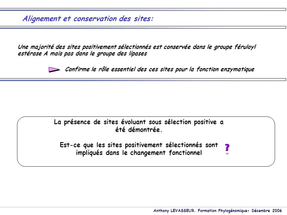 Anthony LEVASSEUR. Formation Phylogénomique- Décembre 2006 Alignement et conservation des sites: Une majorité des sites positivement sélectionnés est