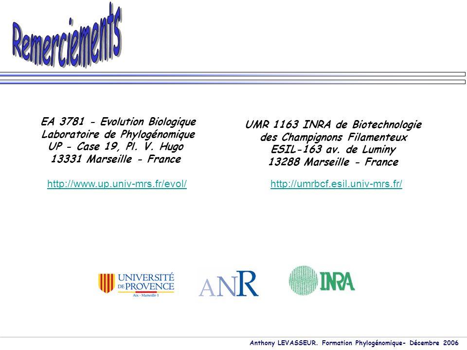 Anthony LEVASSEUR. Formation Phylogénomique- Décembre 2006 EA 3781 - Evolution Biologique Laboratoire de Phylogénomique UP - Case 19, Pl. V. Hugo 1333