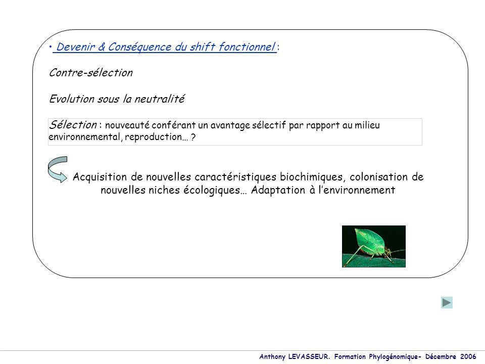 Anthony LEVASSEUR. Formation Phylogénomique- Décembre 2006 Devenir & Conséquence du shift fonctionnel : Contre-sélection Evolution sous la neutralité