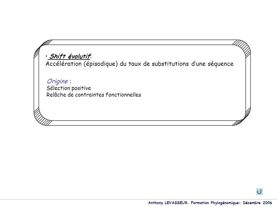 Anthony LEVASSEUR. Formation Phylogénomique- Décembre 2006 Shift évolutif: Accélération (épisodique) du taux de substitutions dune séquence Origine :