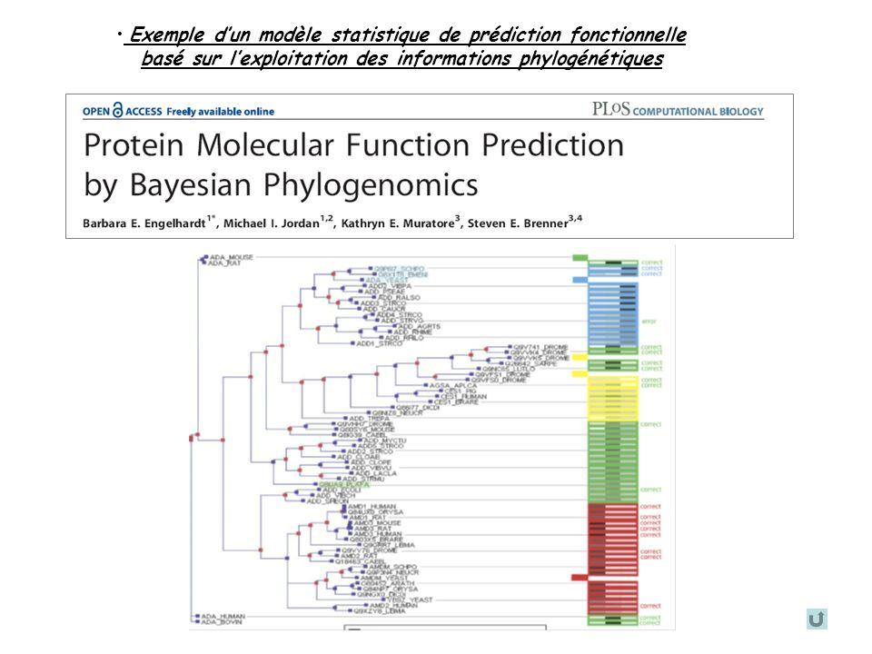 Anthony LEVASSEUR. Formation Phylogénomique- Décembre 2006 Exemple dun modèle statistique de prédiction fonctionnelle basé sur lexploitation des infor