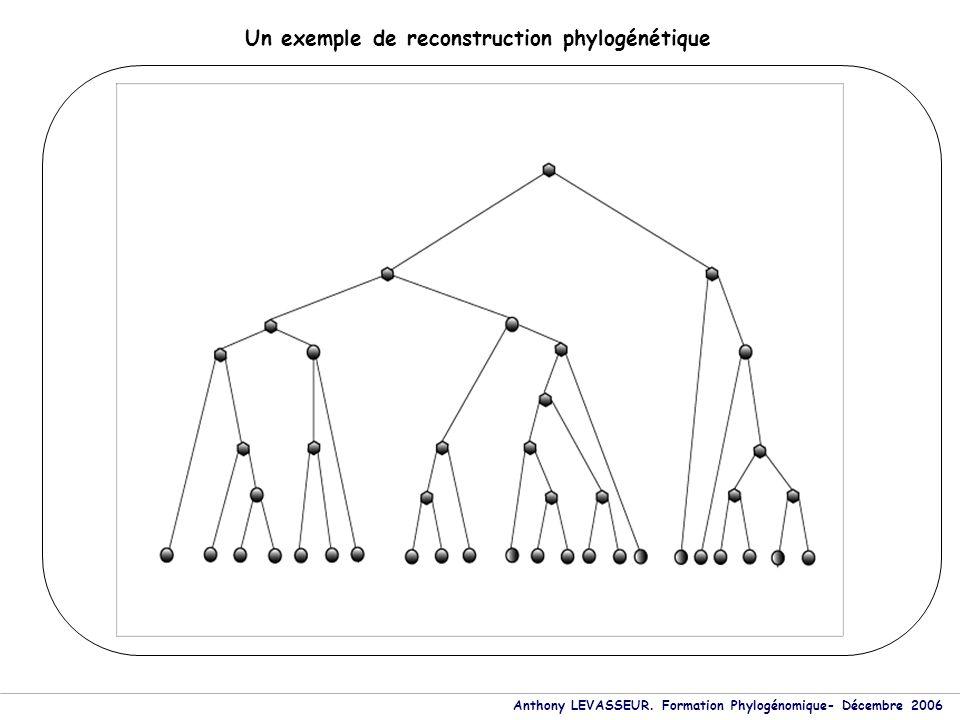 Anthony LEVASSEUR. Formation Phylogénomique- Décembre 2006 Un exemple de reconstruction phylogénétique