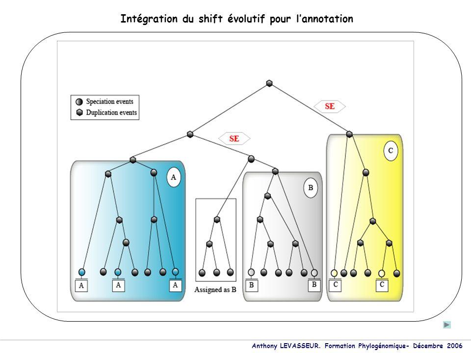 Anthony LEVASSEUR. Formation Phylogénomique- Décembre 2006 Intégration du shift évolutif pour lannotation