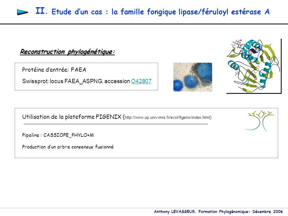 Anthony LEVASSEUR. Formation Phylogénomique- Décembre 2006 Etude dun cas : la famille fongique lipase/féruloyl estérase A II. Reconstruction phylogéné