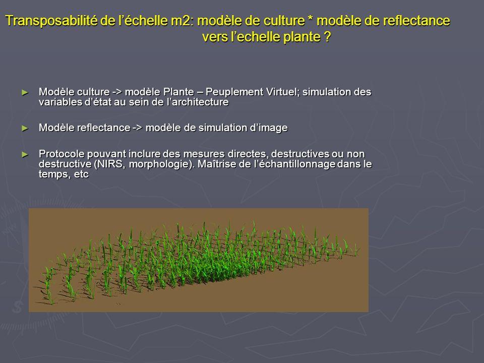 Transposabilité de léchelle m2: modèle de culture * modèle de reflectance vers lechelle plante ? Modèle culture -> modèle Plante – Peuplement Virtuel;