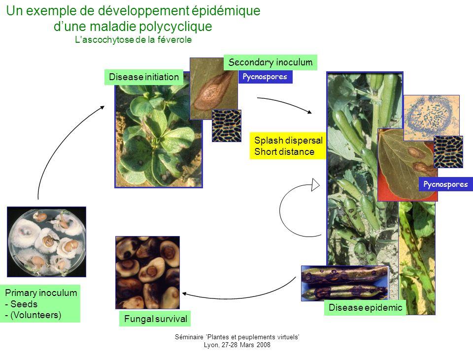 Séminaire Plantes et peuplements virtuels Lyon, 27-28 Mars 2008 Que retenir.