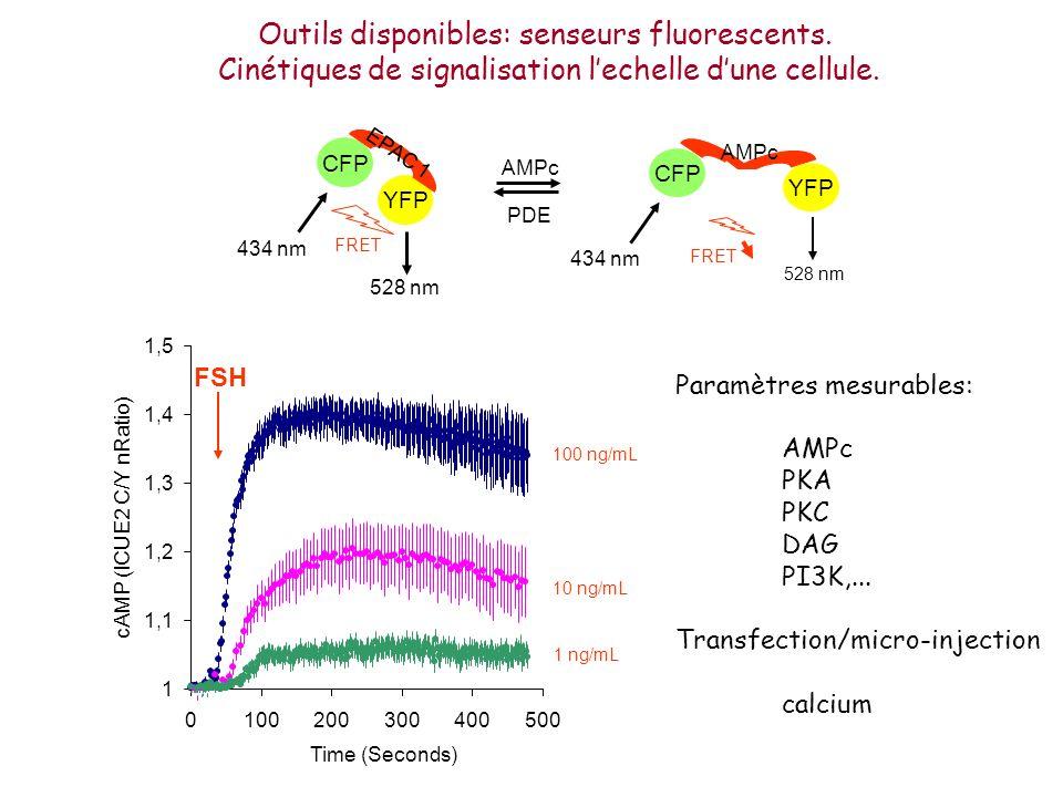 CFP YFP 434 nm 528 nm FRET EPAC 1 AMPc PDE CFP YFP 434 nm 528 nm FRET AMPc Outils disponibles: senseurs fluorescents. Cinétiques de signalisation lech