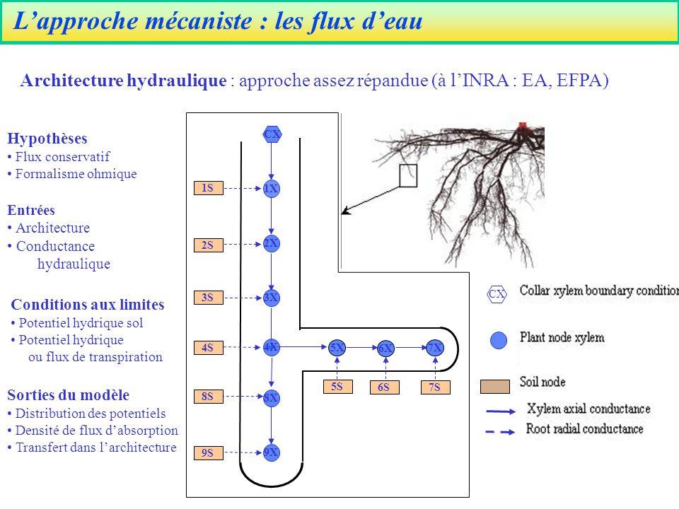 Lapproche mécaniste : les flux deau Entrées Architecture Conductance hydraulique Conditions aux limites Potentiel hydrique sol Potentiel hydrique ou flux de transpiration Hypothèses Flux conservatif Formalisme ohmique Sorties du modèle Distribution des potentiels Densité de flux dabsorption Transfert dans larchitecture CX 1S 3S 2S 4S 8S 9S 6S7S 5X 6X 7X 9X 8X 4X 3X 2X 1X CX 5S Architecture hydraulique : approche assez répandue (à lINRA : EA, EFPA)