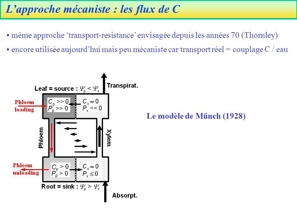 Lapproche mécaniste : les flux de C même approche transport-resistance envisagée depuis les années 70 (Thornley) encore utilisée aujourdhui mais peu mécaniste car transport réel = couplage C / eau Le modèle de Münch (1928)