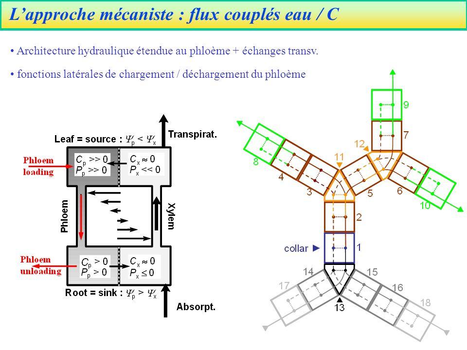 Lapproche mécaniste : flux couplés eau / C Architecture hydraulique étendue au phloème + échanges transv.