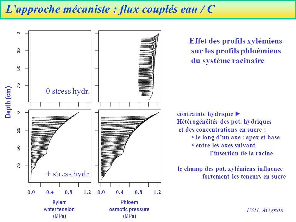 Depth (cm) Phloem osmotic pressure (MPa) Xylem water tension (MPa) 0.0 0.4 0.8 1.2 contrainte hydrique Hétérogénéités des pot.