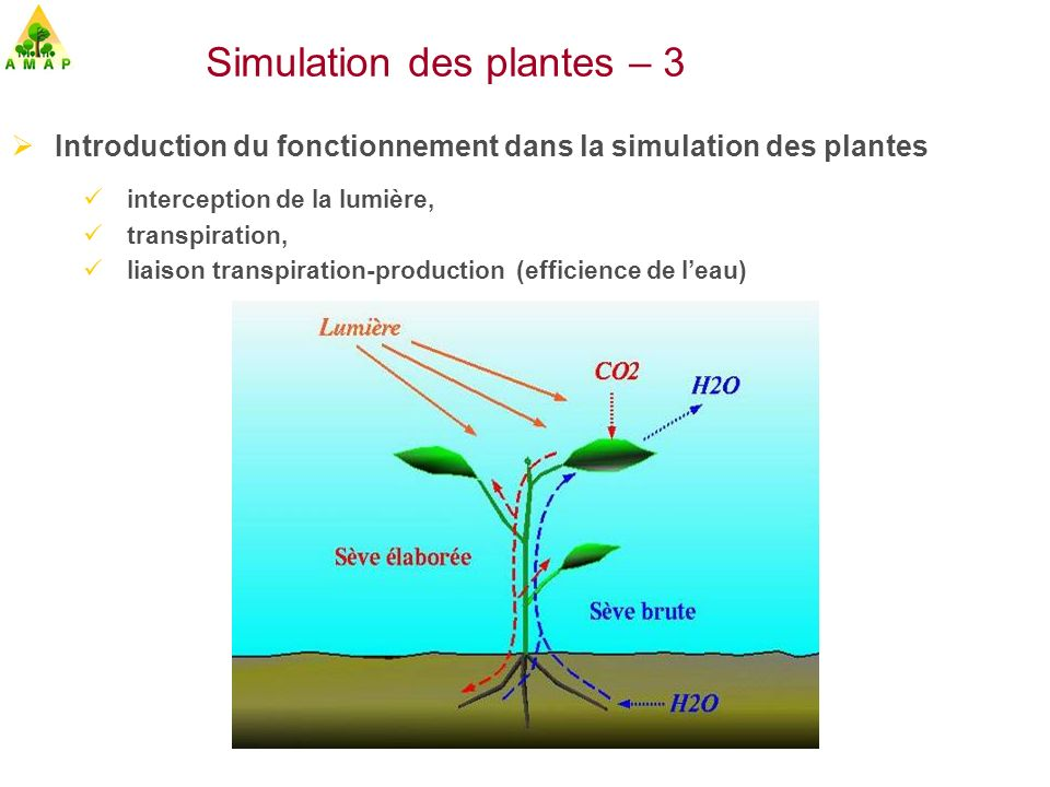 Introduction du fonctionnement dans la simulation des plantes interception de la lumière, transpiration, liaison transpiration-production (efficience
