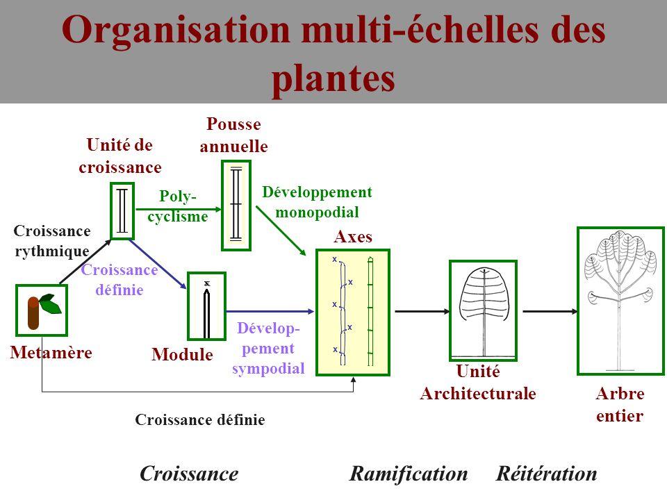 Age Physiologique et gradients morphogénétiques dans lArchitecture de la Plante (D.