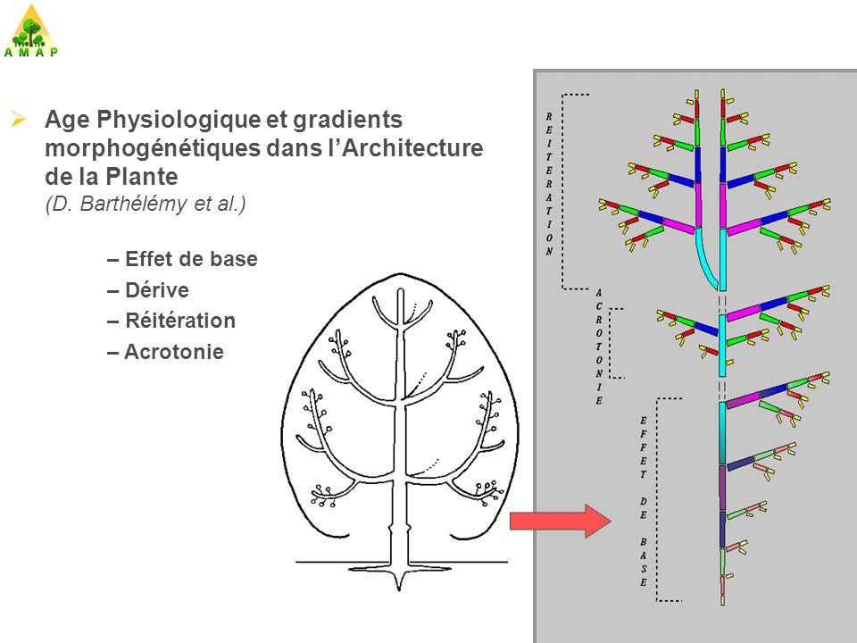 AMAPpara – AMAPhydro Calcul de la matière produite : Simulation des croissances primaire et secondaire des plantes à partir des relations source – puits (Blaise, de Reffye, Fourcaud, Houllier) 1998