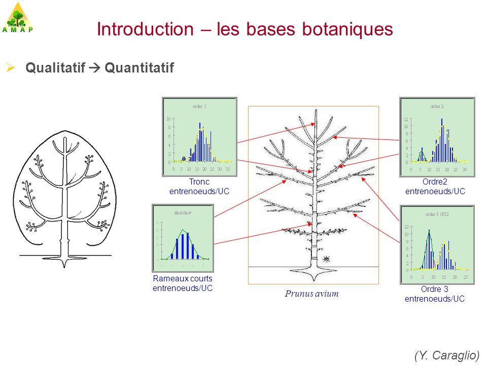simulationvisualisation Mesure, codage, extraction, analyse et représentation des données botaniques : AMAPmod (C.Godin, Y.Guédon) Umr DAP [...