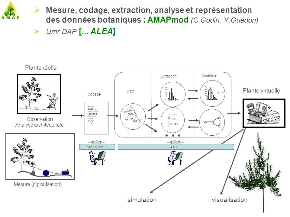 Développement, Croissance et Architecture Croissance Biomasse Agronomie Développement Topologie Botanique Architecture Géometrie Infographie Modèles Structure-Fonction