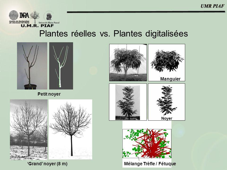 Mélange Trèfle / Fétuque Plantes réelles vs. Plantes digitalisées Walnut Mango1 Noyer Manguier Grand noyer (8 m) Petit noyer