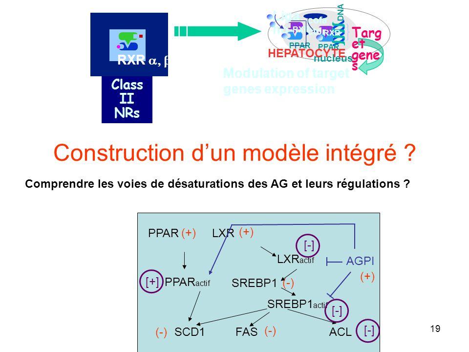 19 Construction dun modèle intégré .